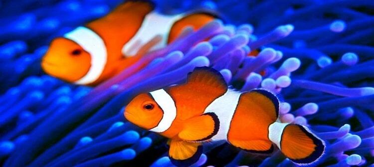 evde-akvaryum-balığı-ile-para-kazanma-iş-fikirleri Evde Akvaryum Balığı Yetiştirerek Para Kazanma