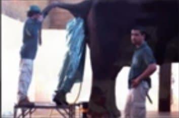 filin-içine-giren-adam Dünyadaki En pis Meslekler
