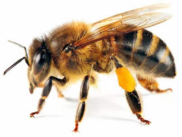 Arı Yetiştiriciliğinden Para Kazanma