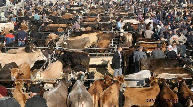 canlı-hayvan-ticareti Kurban Bayramı için yapılacak iş fikirleri
